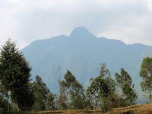 Safari in Rwanda