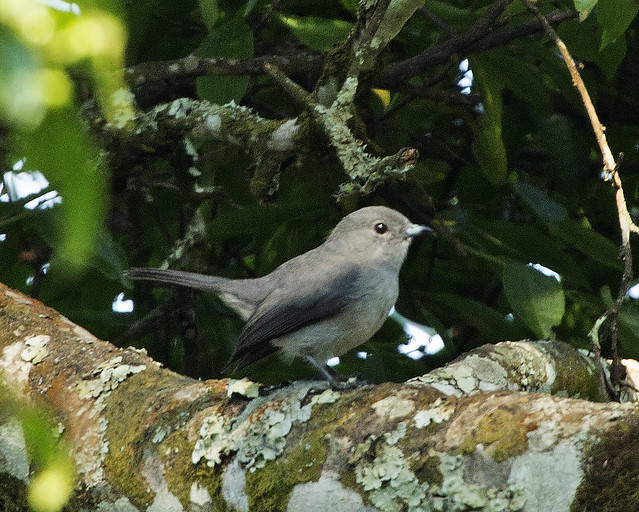 birding trips rwanda