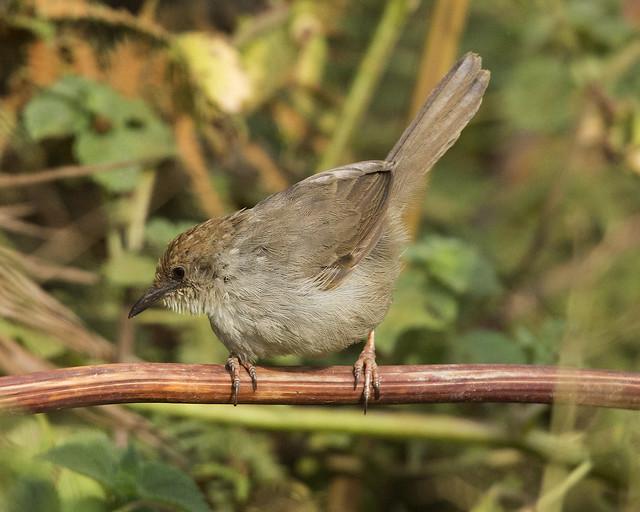 birds of rwanda