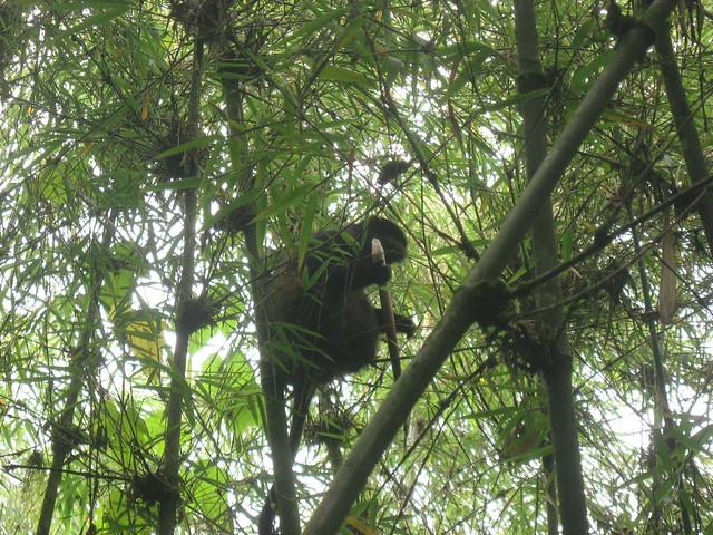 primate tracking rwanda