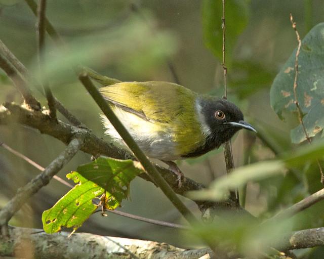 rwanda birdwatching