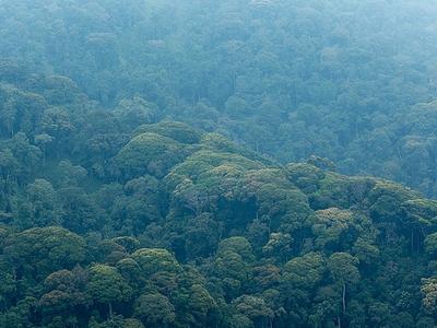 thick forest rwanda